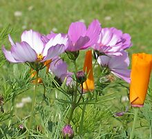 Cosmos and California Poppies 3 by art2plunder