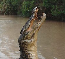 Jumping Crocodile by Matthew Walmsley-Sims