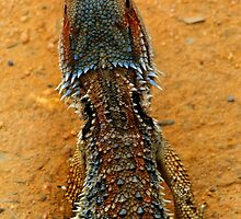 DRAGON SCALES by Helen Akerstrom Photography