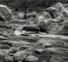 Walrus on the Wollondilly by Jeff Catford