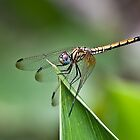 Dragon Fly by Ahiraj Bhat