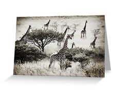 Africa Giraffes at Tala Greeting Card