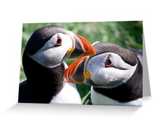 Puffin Pair Greeting Card