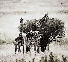 Giraffes In Africa by Robyn Liebenberg