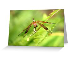 Top End Dragon Fly Greeting Card