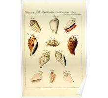 Neues systematisches Conchylien-Cabinet - 181 Poster