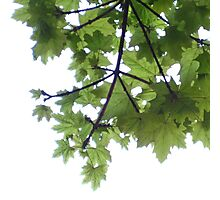 Tree above from below Photographic Print