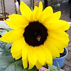 sunflower by leerockell