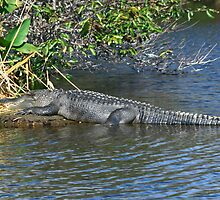 Woa, He's a big one! Florida by nancyb926