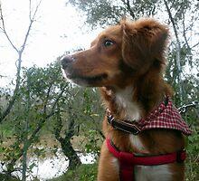 Fox in the hound 2 by Hazel Dean