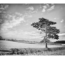 Once a forest stood here. Photographic Print
