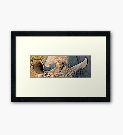 Rhinos Do Have Something Between Their Ears Framed Print
