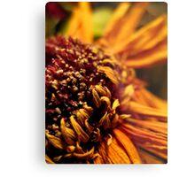 Dried Sunflower Metal Print