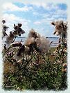 Cotton Candy Clouds, Cotton Candy Thistles by RC deWinter