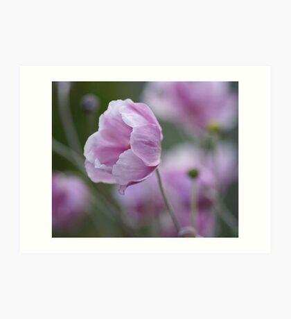 Japanese anemone Art Print
