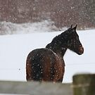 Fulgar In The Snow by KatsEye