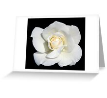 Singe White Rose Greeting Card
