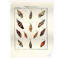 Neues systematisches Conchylien-Cabinet - 252 Poster