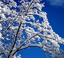 Blue Skies of Winter   ^ by ctheworld