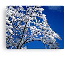 Blue Skies of Winter   ^ Canvas Print