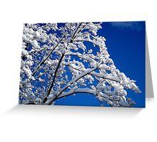 Blue Skies of Winter   ^ Greeting Card