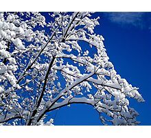 Blue Skies of Winter   ^ Photographic Print
