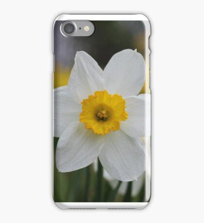 A Daffodil Amongst Daffodils iPhone Case/Skin