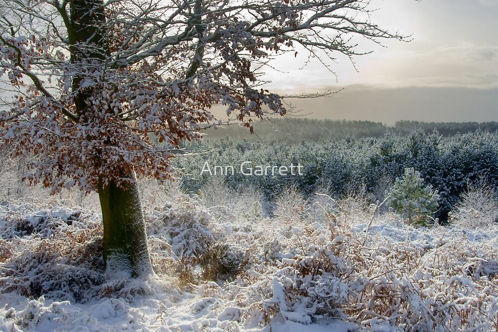 Snow Covered Firs by Ann Garrett