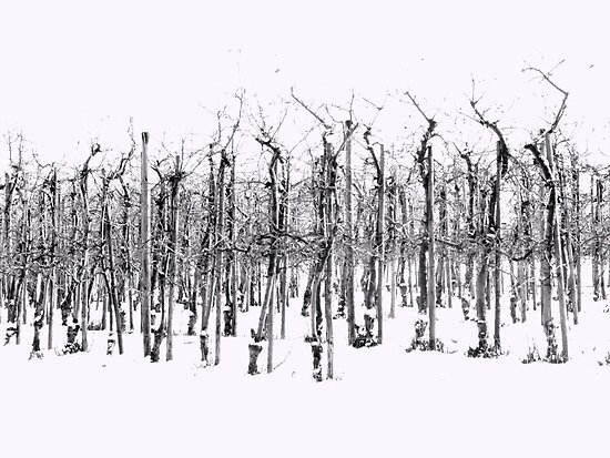 Winter Orchard ©  by JUSTART