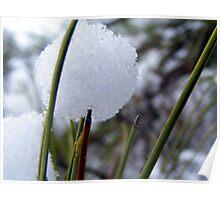 A Pine Snowball Poster