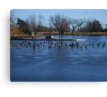 Canadian Geese  Resting on Blue Ice Canvas Print