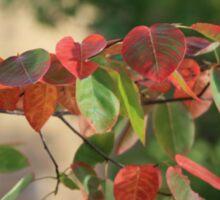 Colorful Fall Kansas Leave's Closeup Sticker