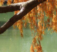 Colorful Fall Bald Cypress Sticker