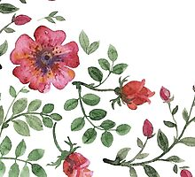 watercolor roses by OlgaBerlet