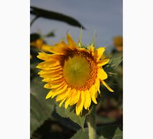 Bright and Colorful Sunflower in a Field Unisex T-Shirt