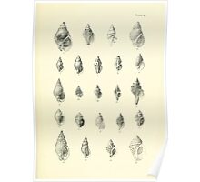 Manual of the New Zealand Mollusca by Henry Sutter 1915 0189 Alectrion Thais Thais Trophon Poster