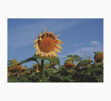 Colorful Kansas Sunflower in a field Kids Tee