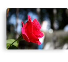 Bright and Colorful RED ROSE close up Canvas Print