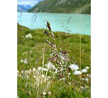 Swaying Grass In Austrian Mountains Photographic Print