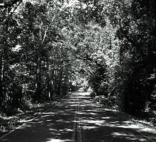 Old Saint Augustine Road by darkfluidity