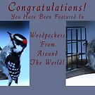 Downy Woodpecker Collage Banner by KatsEye