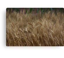 Country Kansas Wheat Field Canvas Print