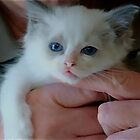 Lily-Rose at 8 Weeks Old! by Carol Clifford