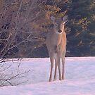 Good Morning Deer! by MaeBelle