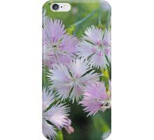 Clove Pink (Dianthus caryophyllus) iPhone Case/Skin