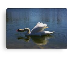 Swimming Swan in a Lake Canvas Print