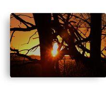 Dead Tree Sunset in Kansas Canvas Print