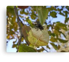 Spider and the Fly Canvas Print