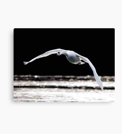 Defying Gravity Canvas Print