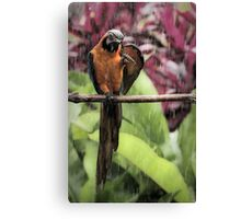 soggy polly Canvas Print